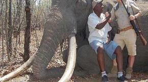 सबसे बड़े हाथी का शिकार, वन्यजीव प्रेमियों में हाहाकार