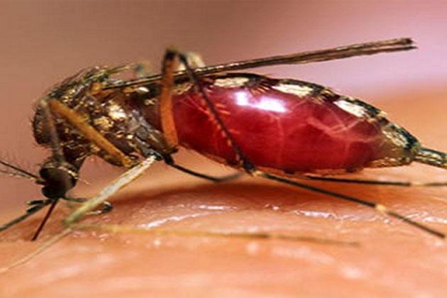 dengue-patient