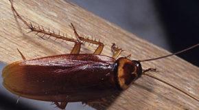 अगर मख्खी, मच्छर, चीटी, काकरोच से परेशान हैं तो…
