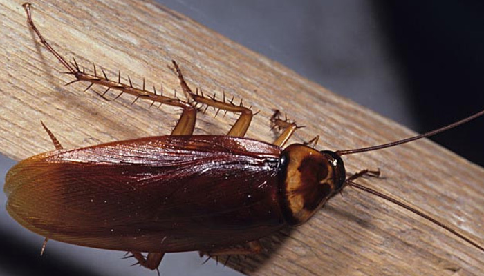 cockroaches31-08-15