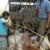 भारतीय पशुओं की तस्करी बंद करना चाहता है बांग्लादेश